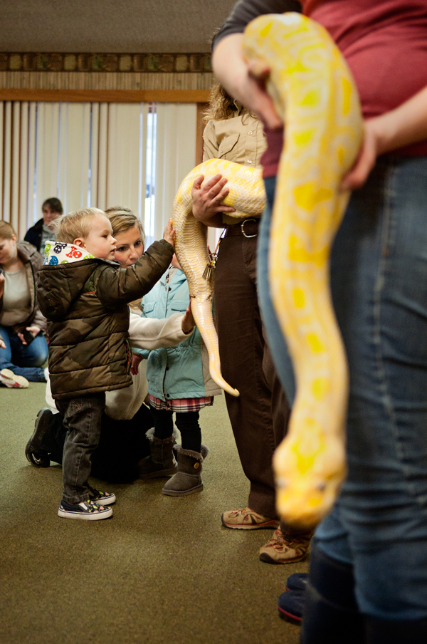 The Knee High Naturalists are introduced to an albino python at Binder Park Zoo.